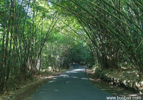 hutan-bambo-penglipuran